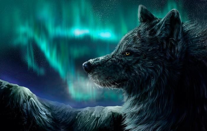113764-wolf-aurora-polaris-look.jpg