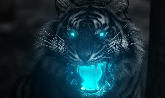 4521379-animals-tiger.jpg