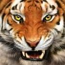 Tigre_